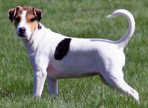 Matador Dog Breeds