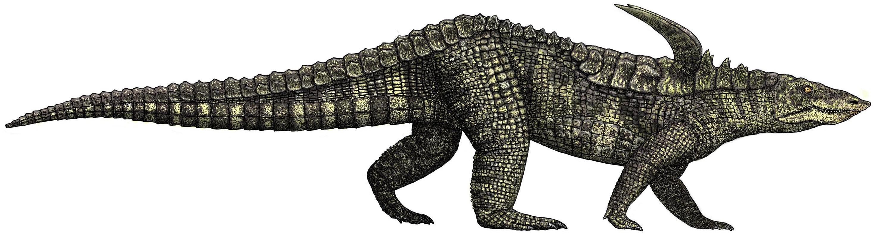 Desmatosuchus | Dinosaur Wiki | FANDOM powered by Wikia
