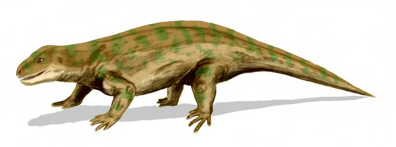 Depiction of Diadectidae
