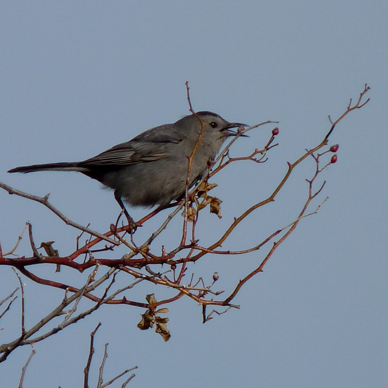A bird may be known by its song 7