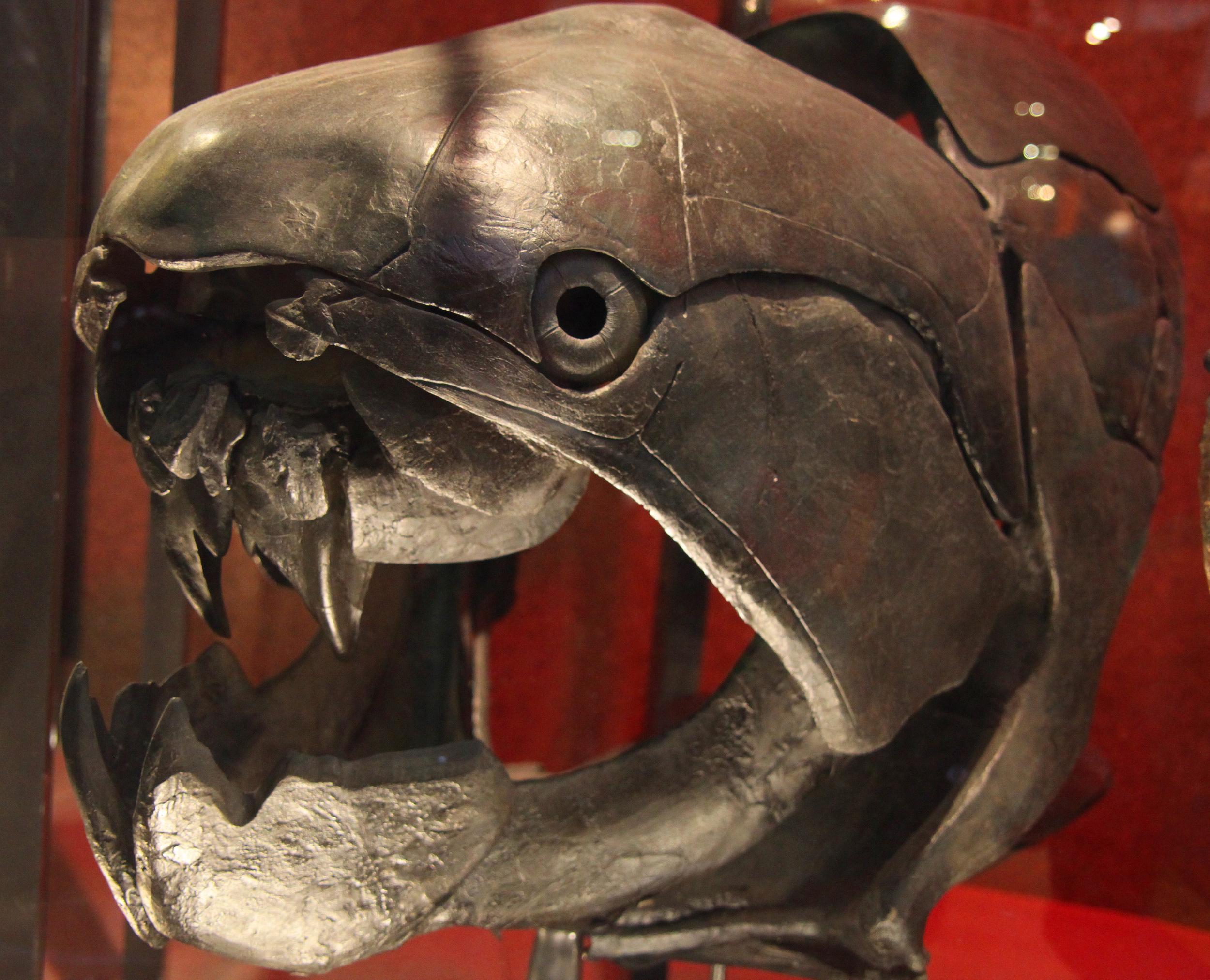 humans should thank ancient scottish fish fossils