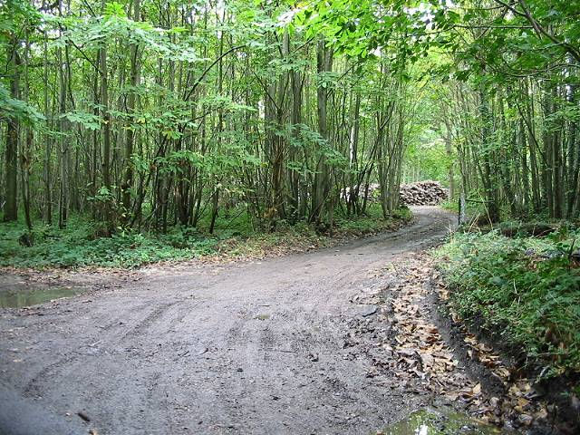 Entrance to area of felled trees in Denge Wood - geograph.org.uk - 571789