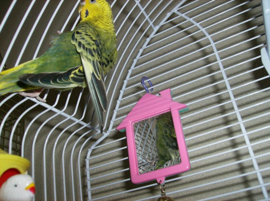 Spiegel und Plastikvögel gelten als gefährliches Spielzeug