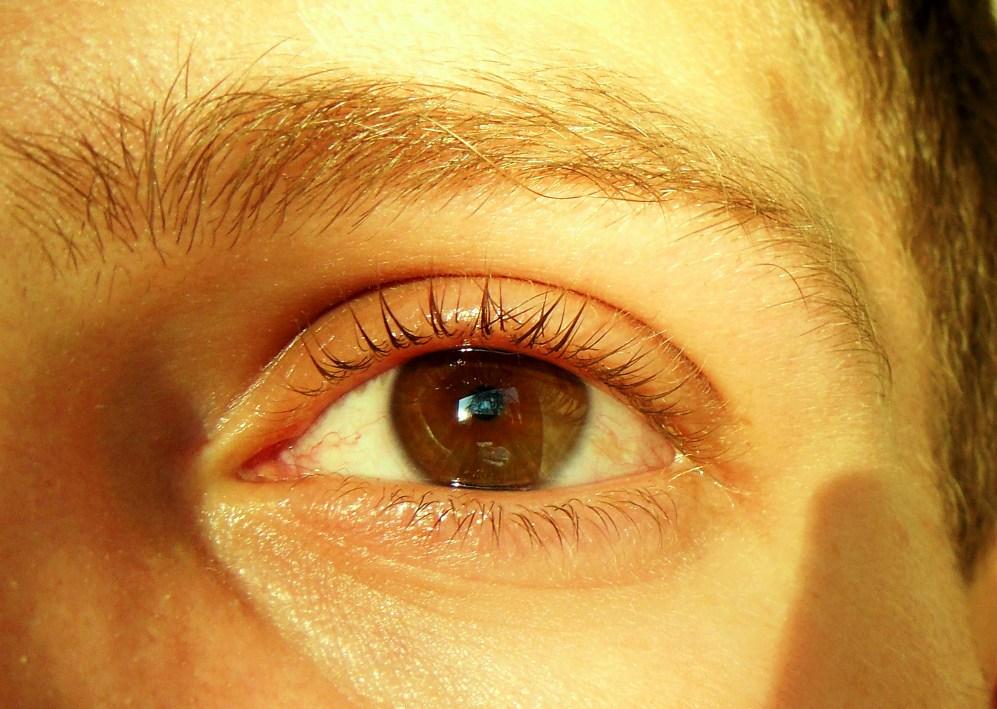 Filehoney Brown Eyesjpg Wikimedia Commons