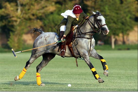Iranian Polo Player