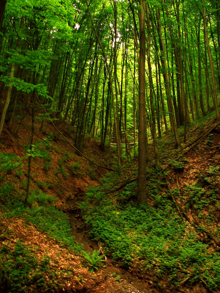 Plik Ivan Forest By Sa Jpg Wikipedia Wolna Encyklopedia