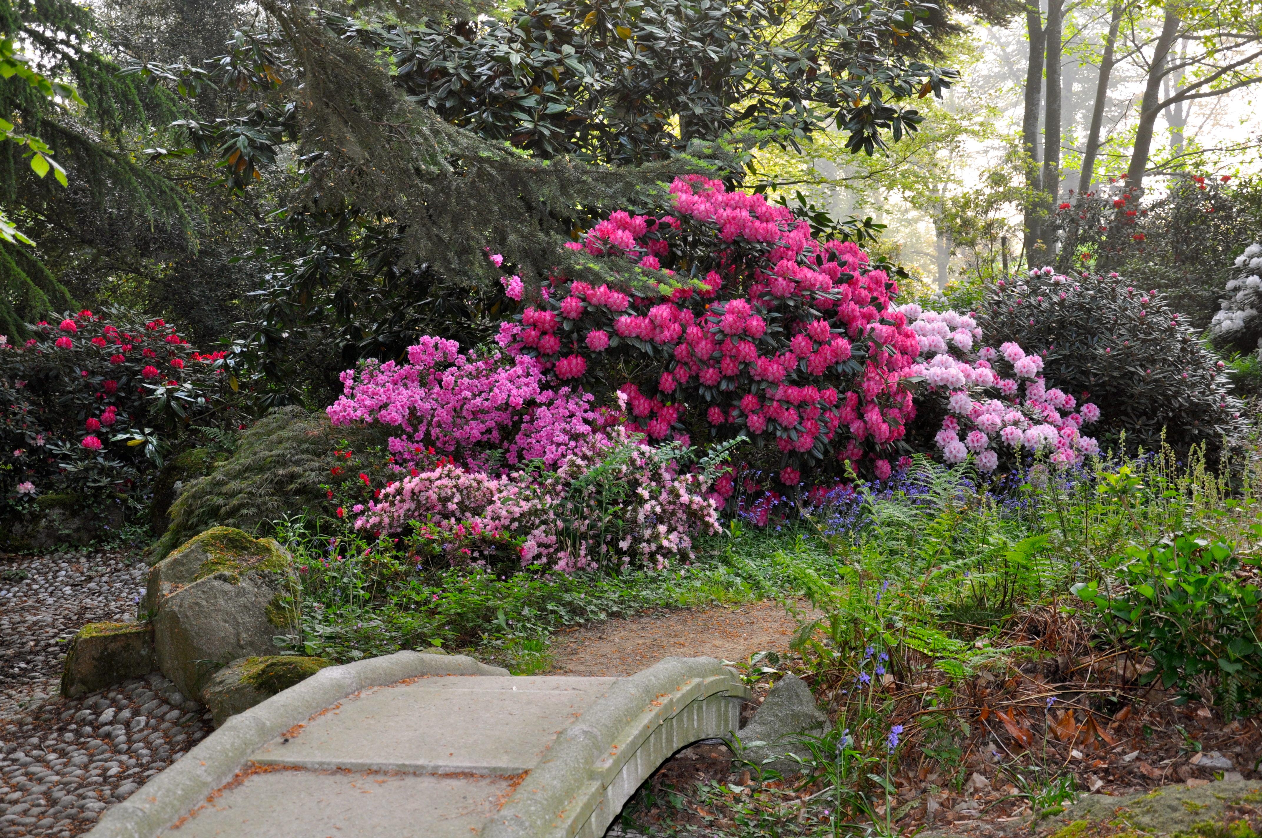 File le jardin des nuits toil es du parc botanique de haute bretagne jpg wikimedia commons - Parc botanique de haute bretagne ...