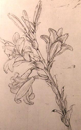 File:Leonardo lilies.JPG