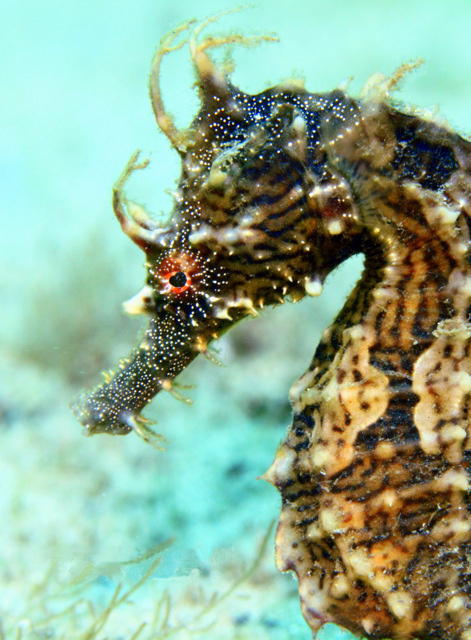 Image result for seahorses untangled a heading for shore