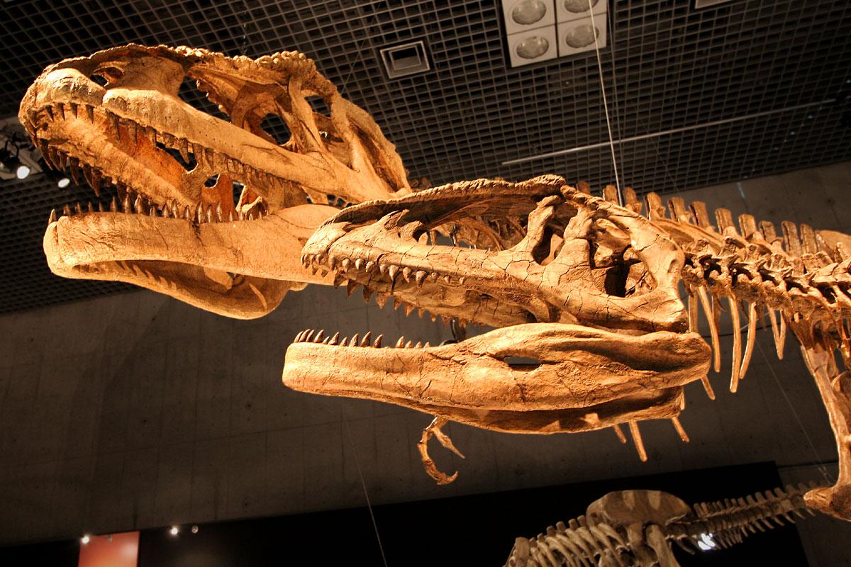 Mapusaurus_skulls.jpg