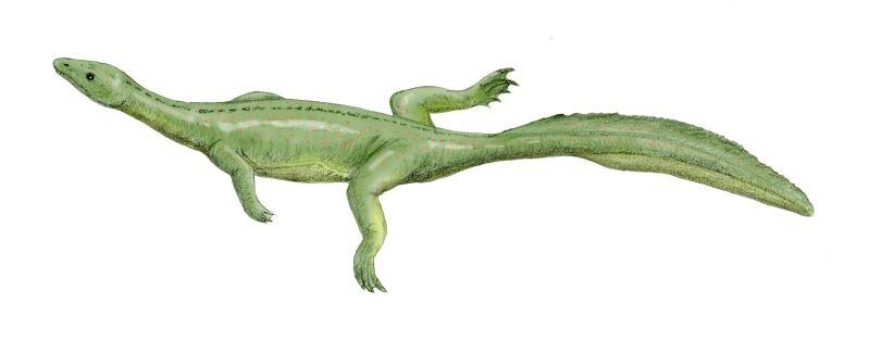 File:Miodentosaurus BW.jpg
