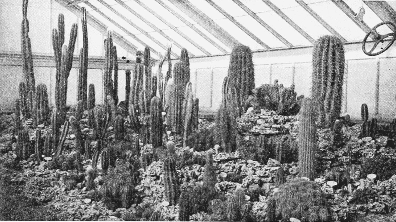 PSM V62 D214 A cactus house.png