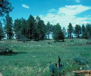 Point of Pines Sites.jpg