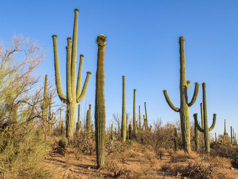 Saguaro National Park (West) 4.jpg