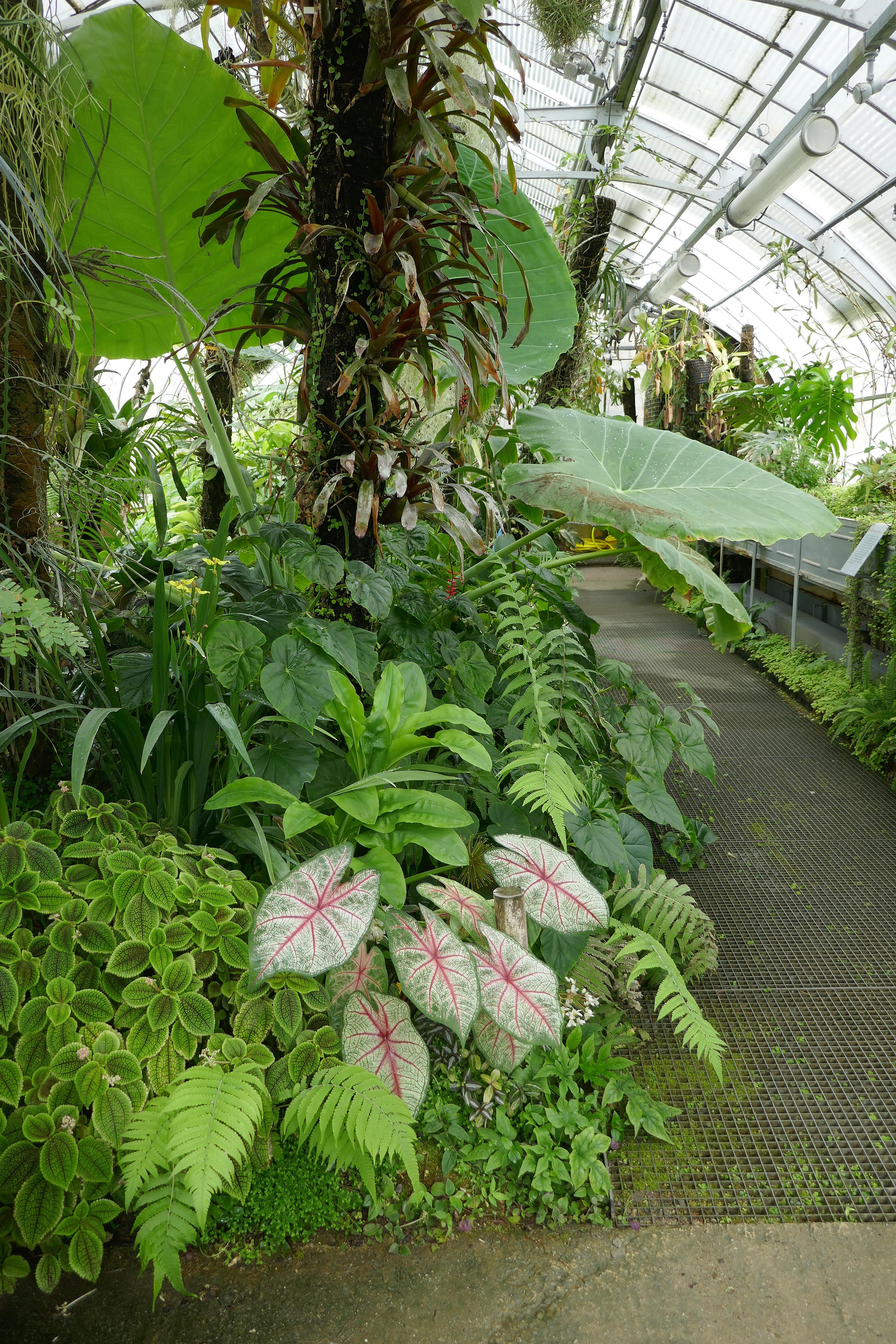 File:Serre tropicale-Jardin des plantes de Nantes.jpg ...