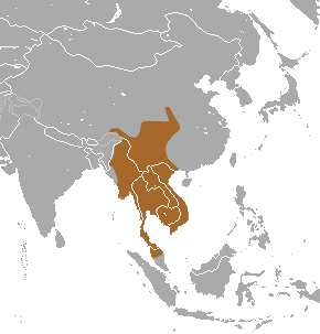 The average adult weight of a Southeast Asian shrew is 12 grams (0.03 lbs)