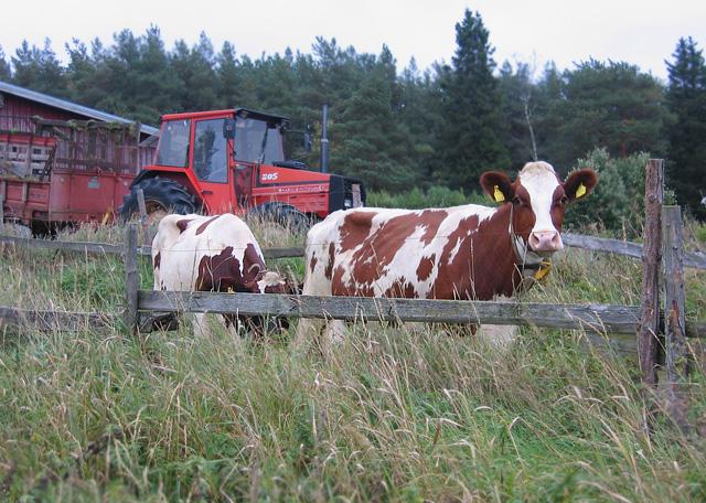 Rare Earth Farms Food Truck Reviews