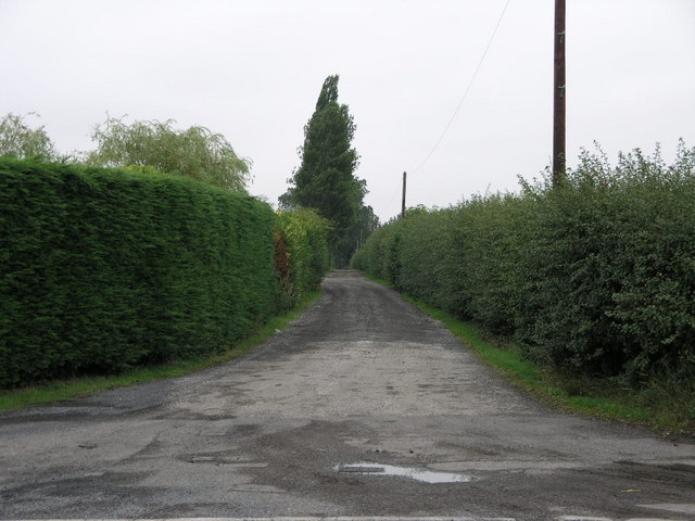 File:Tall Green Hedges - geograph.org.uk - 217511.jpg