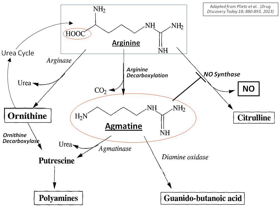 Misc - Agmantine Sulfate for Kratom tolerance/potentiation