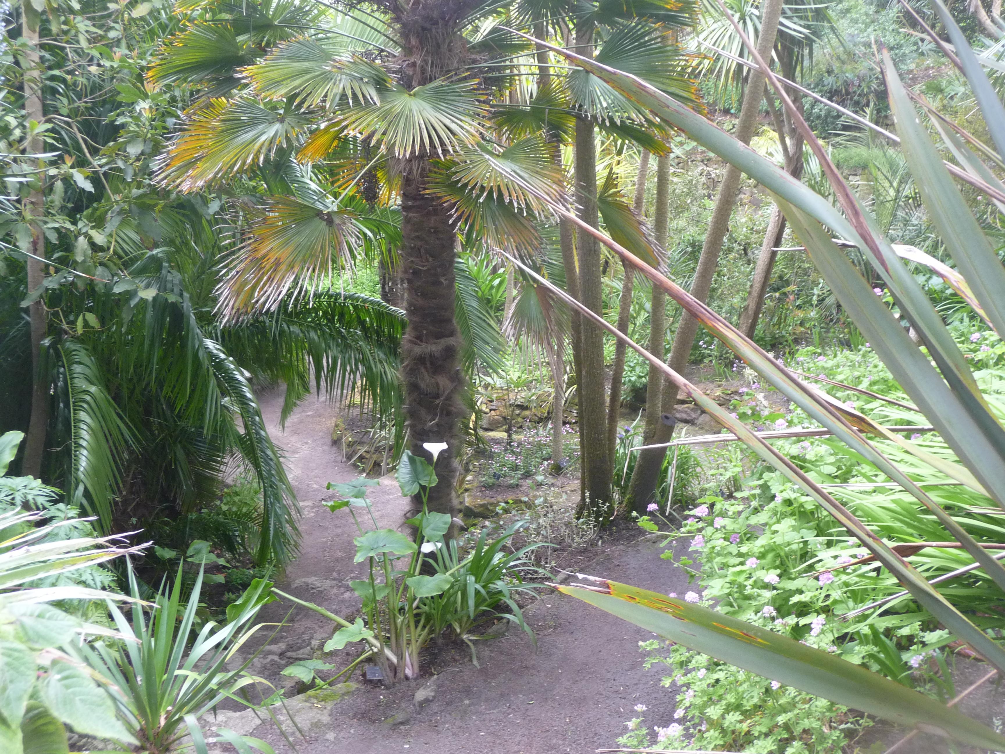 File le de batz 030 jardin georges delaselle jpg for Jardin georges delaselle