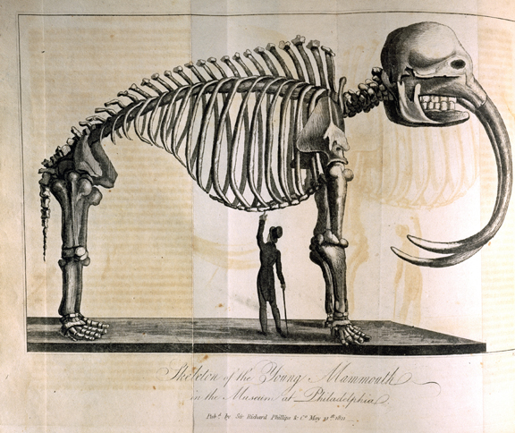 """Skeleton of the Young Mammouth in the Museum at Philadelphia."" Illustration in Édouard de Montulé, A Voyage to North America, and the West Indies, in 1817 (2919839707).jpg"