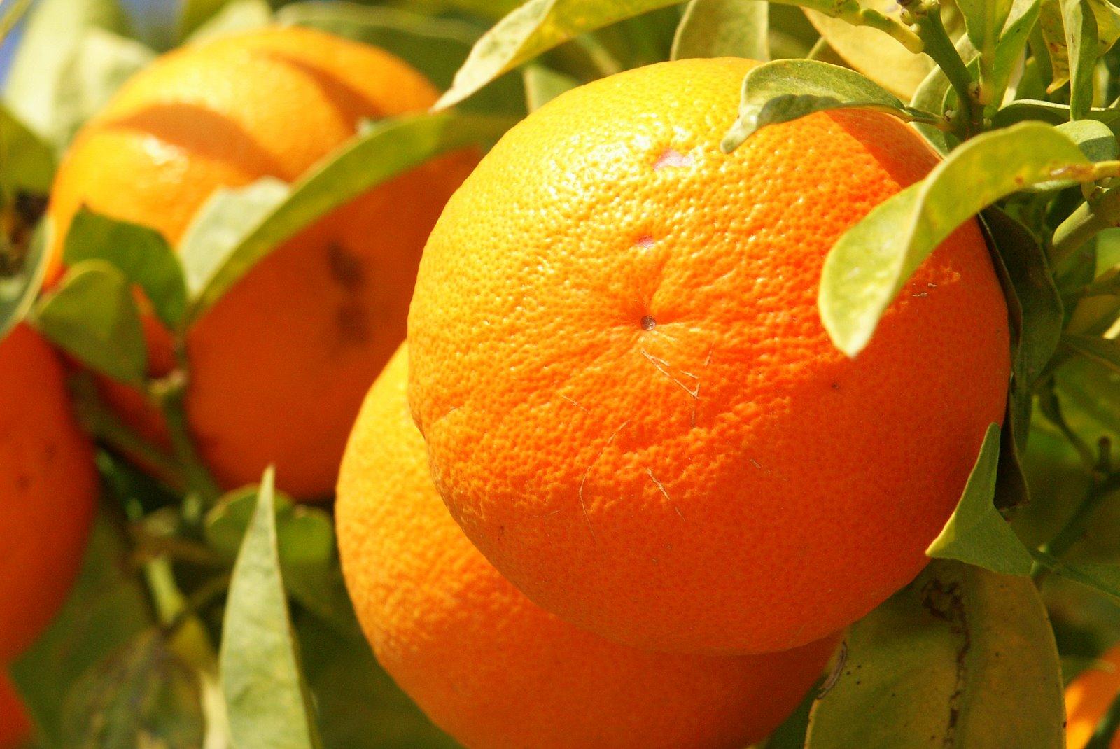 orange [image]