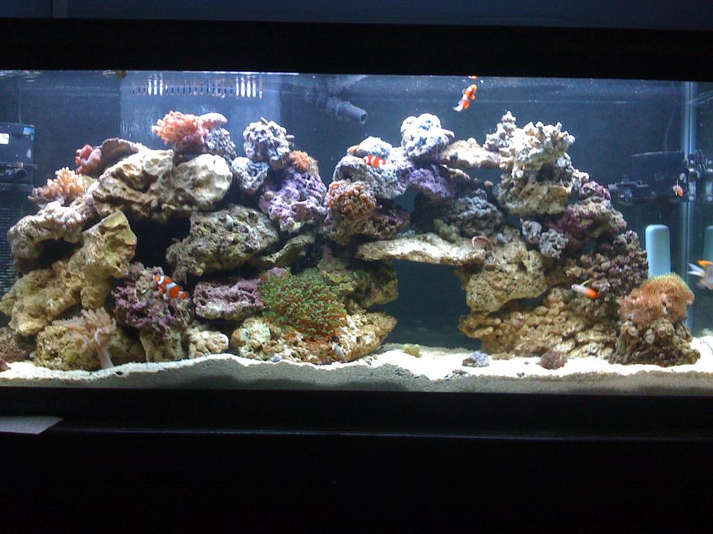 File 55 gallon reef for 55 gallon fish tank setup