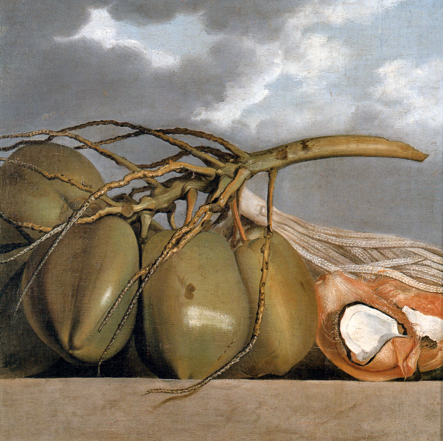 File:Albert Eckhout - Cocos.jpg