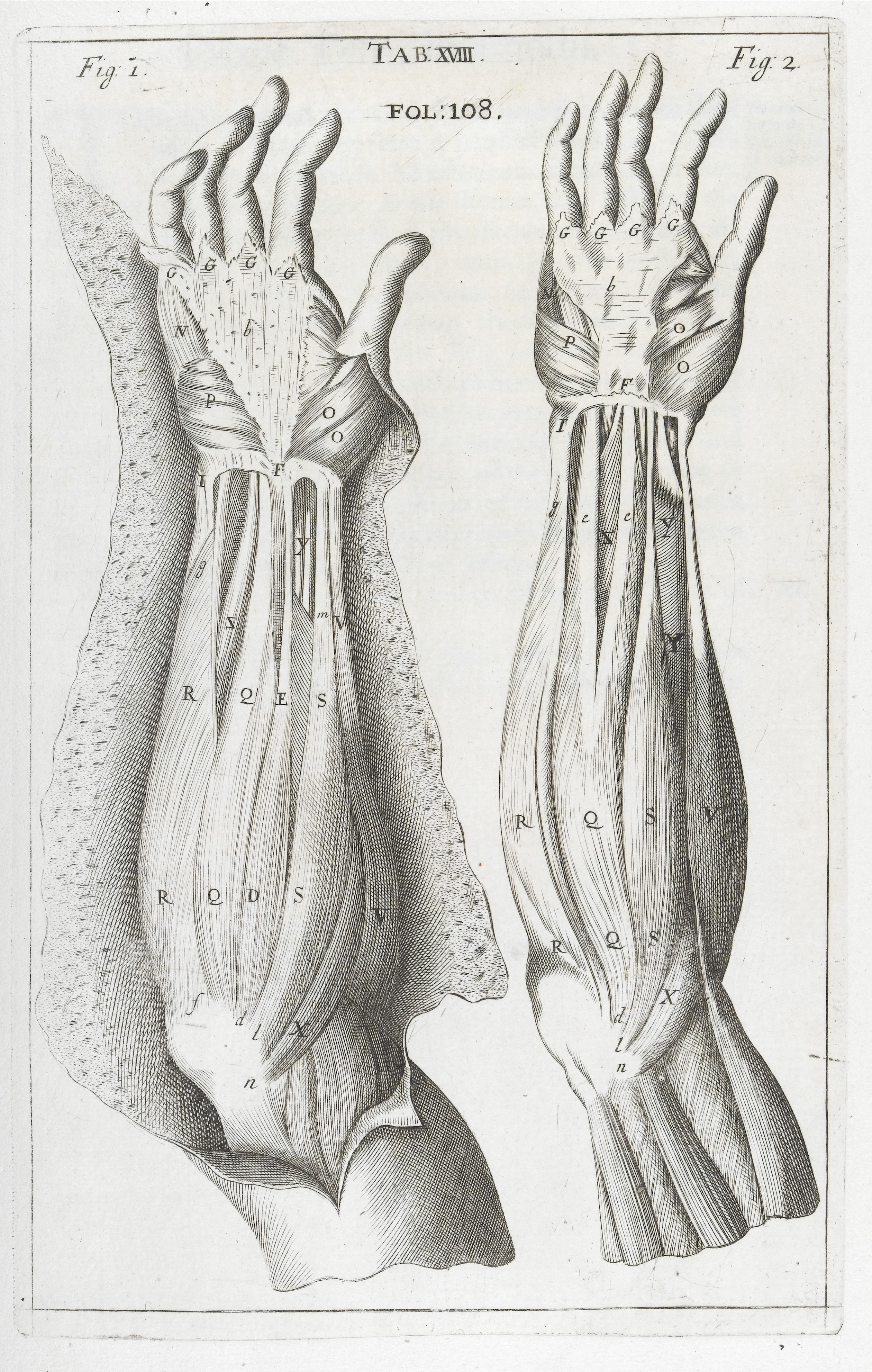 File:Anatomical illustrations showing muscles of the lower arm ...