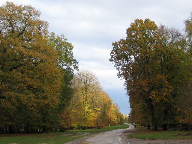 Autumn Splendour on Monument Drive, Ashridge - geograph.org.uk - 1568812