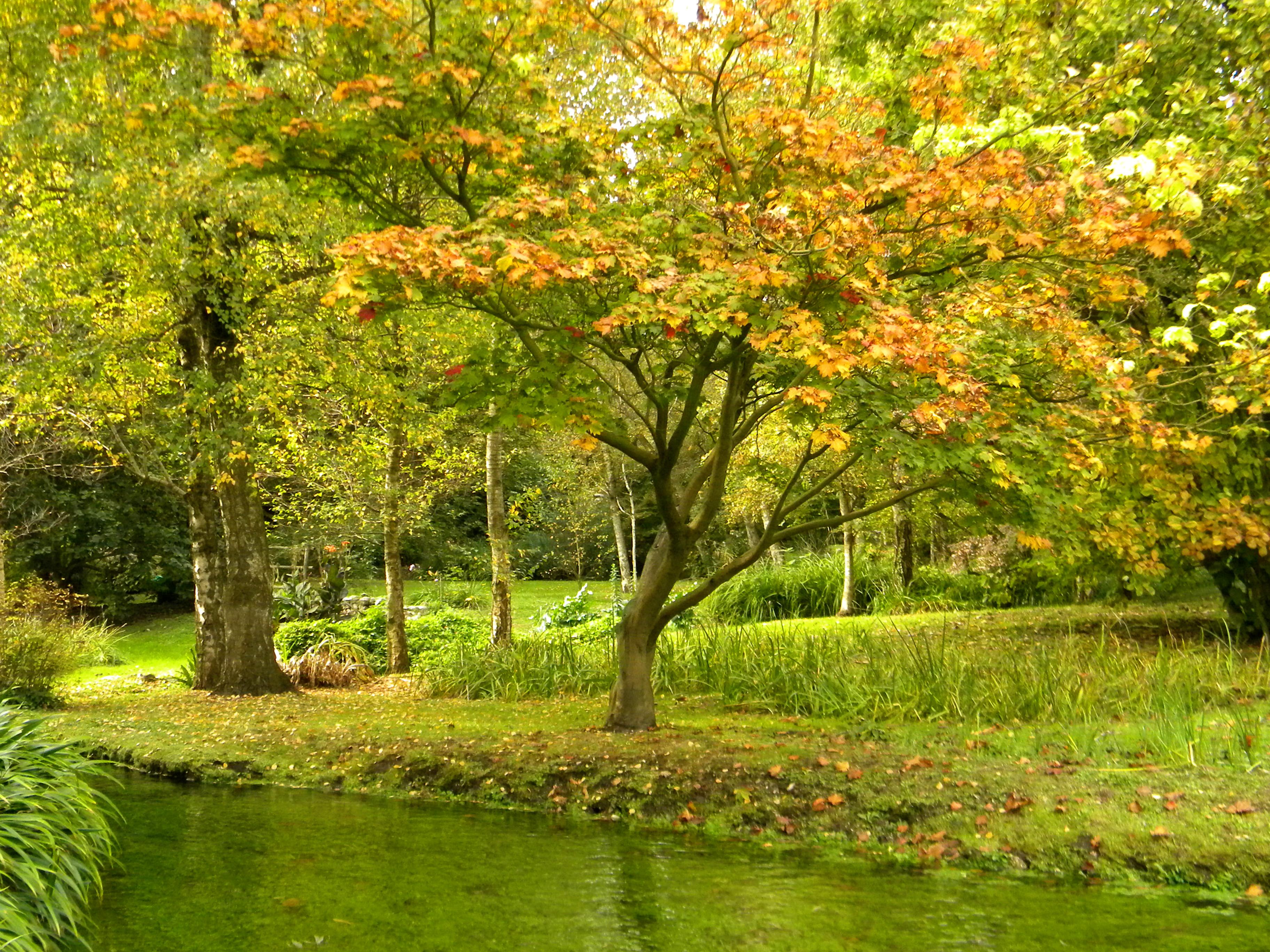 file autunno dorato al giardino di ninfa jpg wikimedia