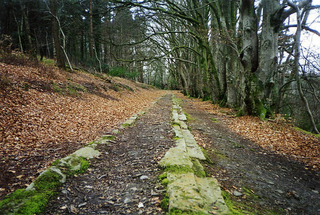 Bovey Tracey, Haytor Tramway in Yarner Woods - geograph.org.uk - 42156