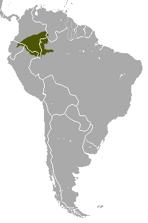 Distribución del churuco