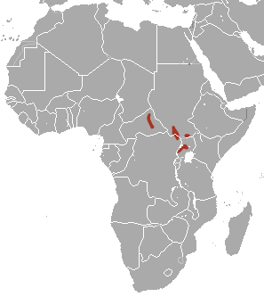 The average litter size of a Bunyoro rabbit is 1