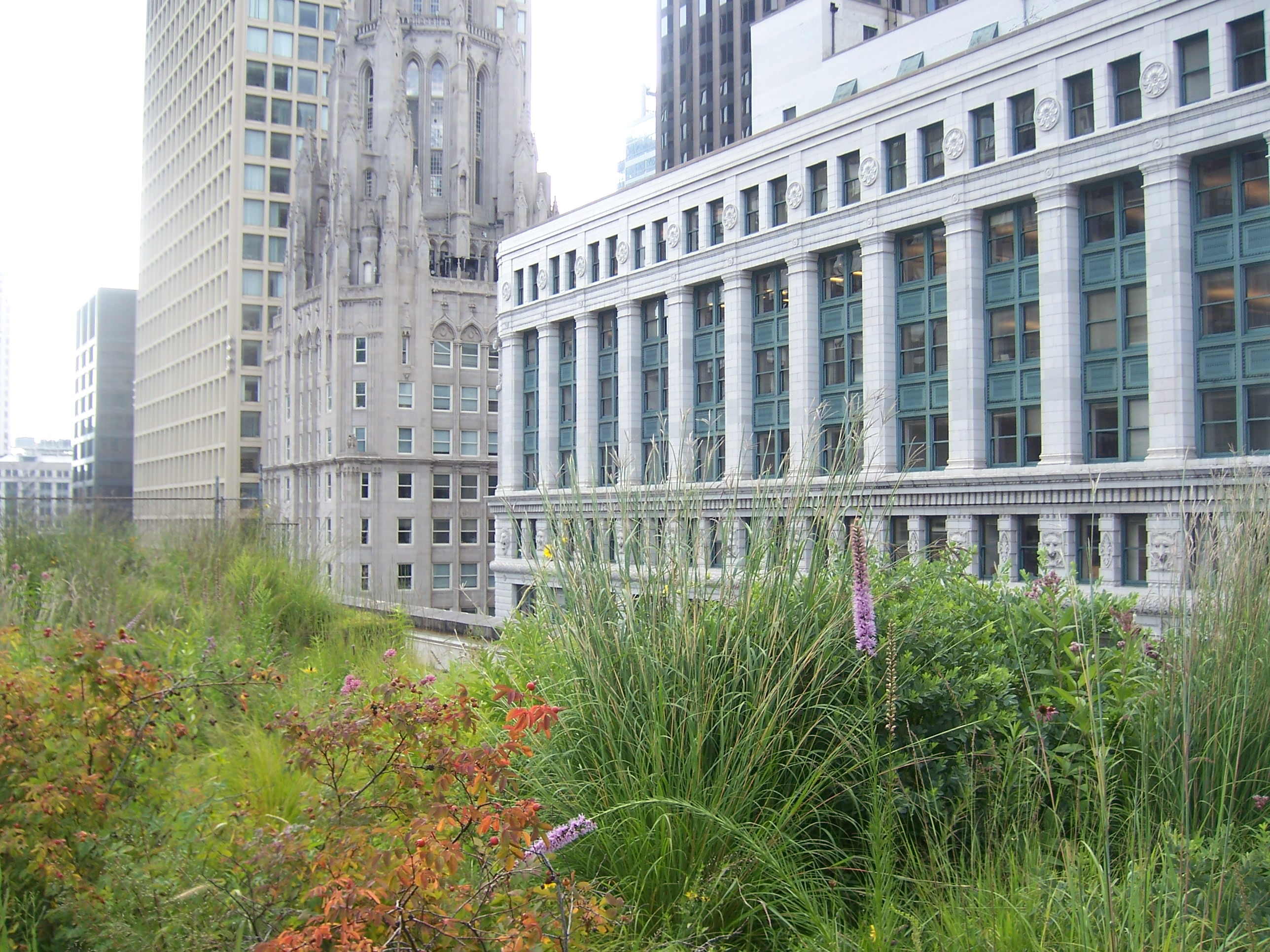 File:Chicago City Hall Green Roof 02