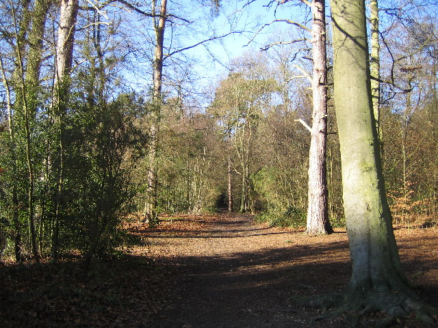 Chipperfield Common - geograph.org.uk - 113952