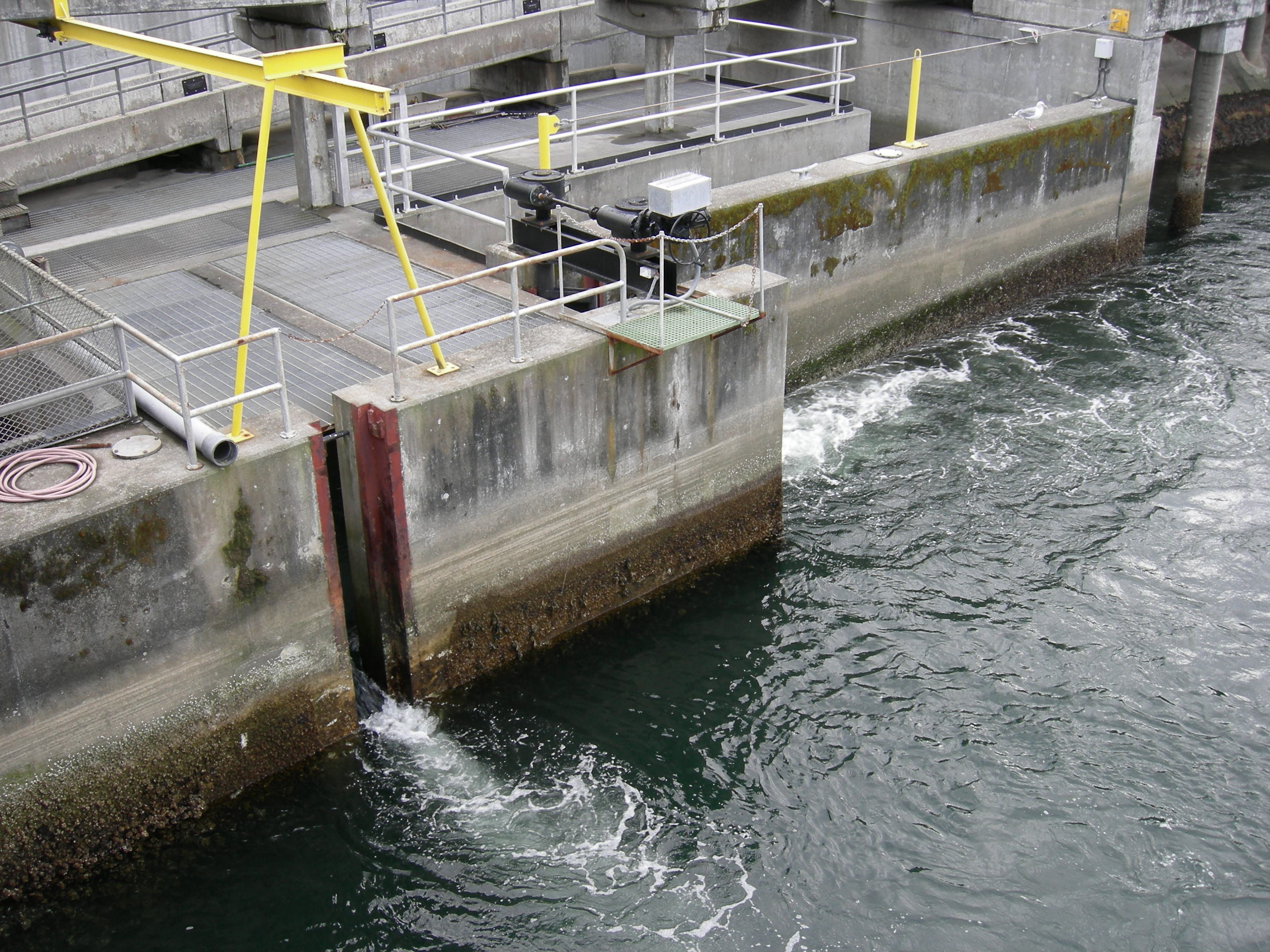 File chittenden locks entrance to the fish for Ballard locks fish ladder