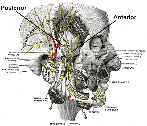 5463291 also 15096816 additionally 8121748 also 18022672 further Sphenoid Bone. on anatomical terms of location