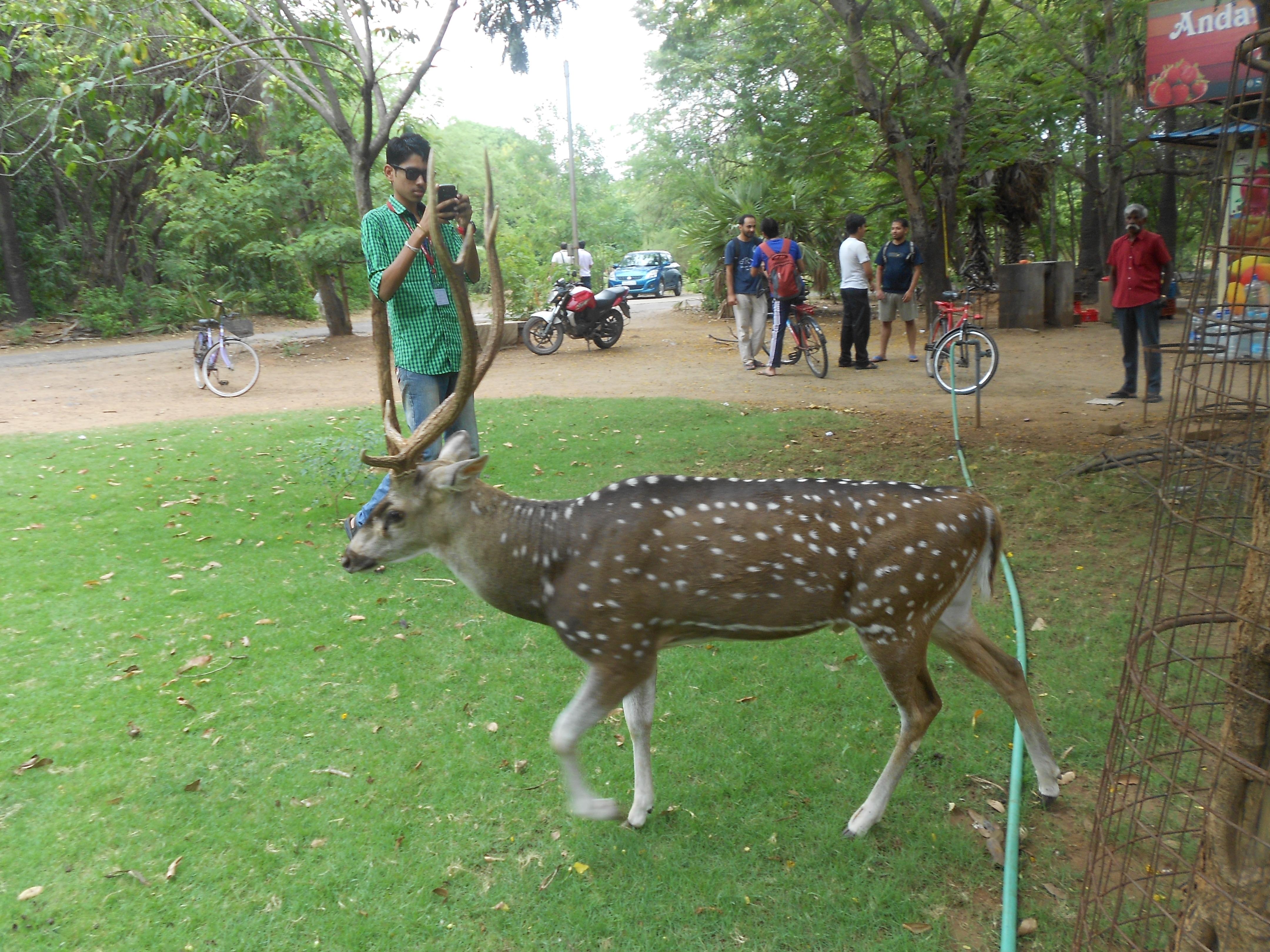 IIT Madras Wikipedia: File:Deer Roaming Outside The Mess Of IIT Madras.jpg