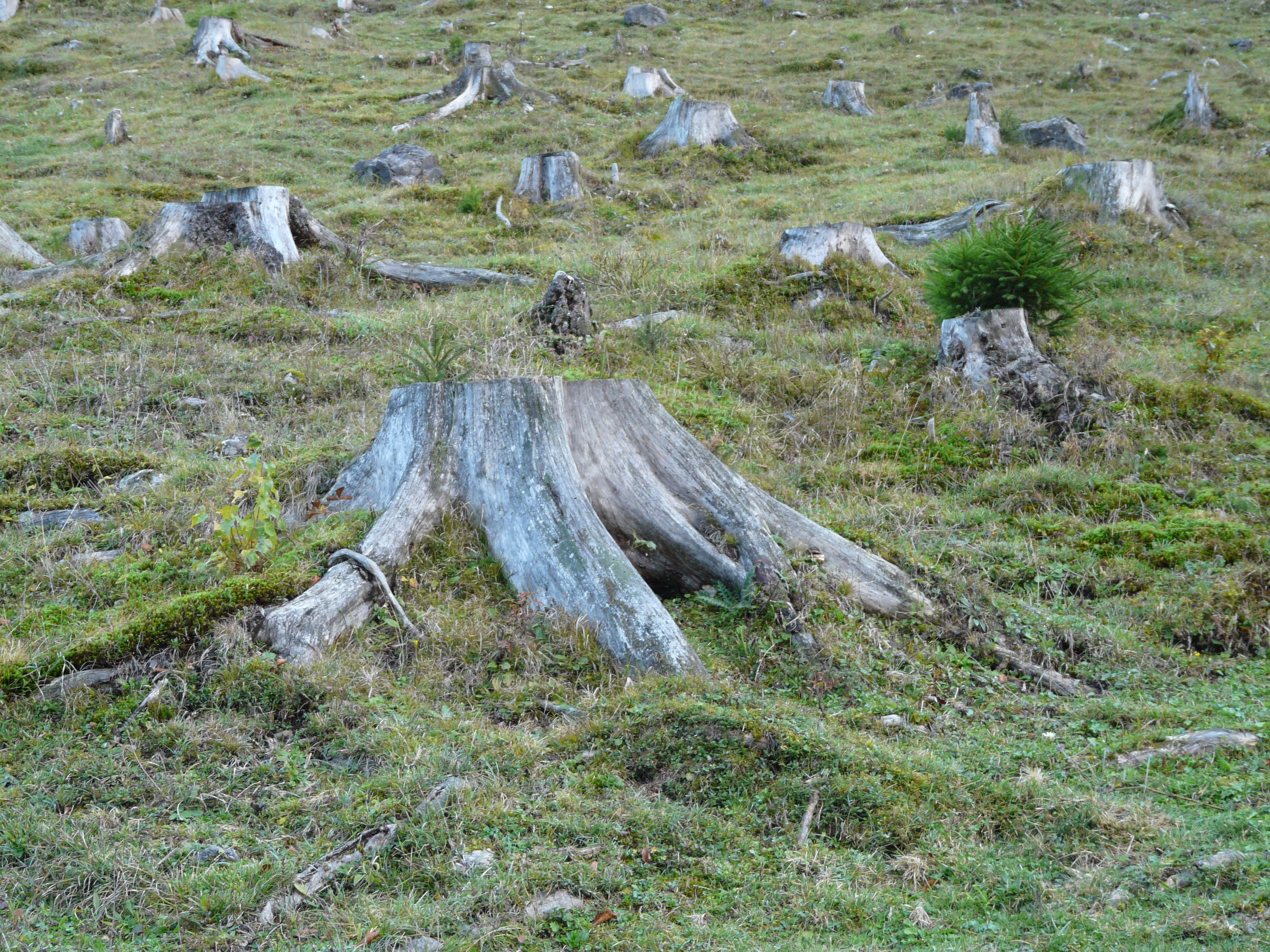 Image Result For Simple Forest Animal