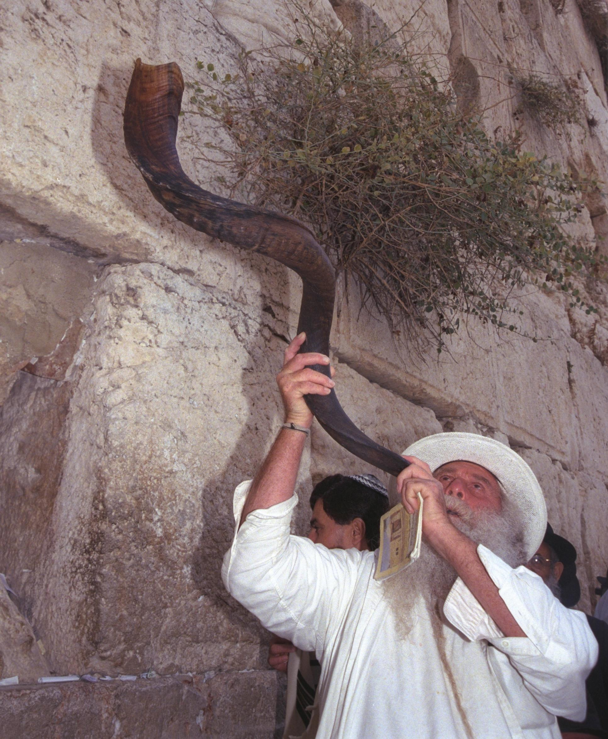 Fichier:Flickr - Government Press Office (GPO) - Blowing the Shofar at the  Western Wall (cropped-01).jpg — Wikipédia