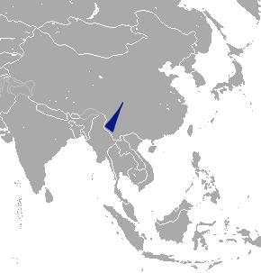 Greater Chinese mole species of mammal