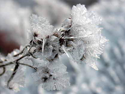 O παγετός είναι ένας από τους πιο επικίνδυνους εχθρούς των φυτών