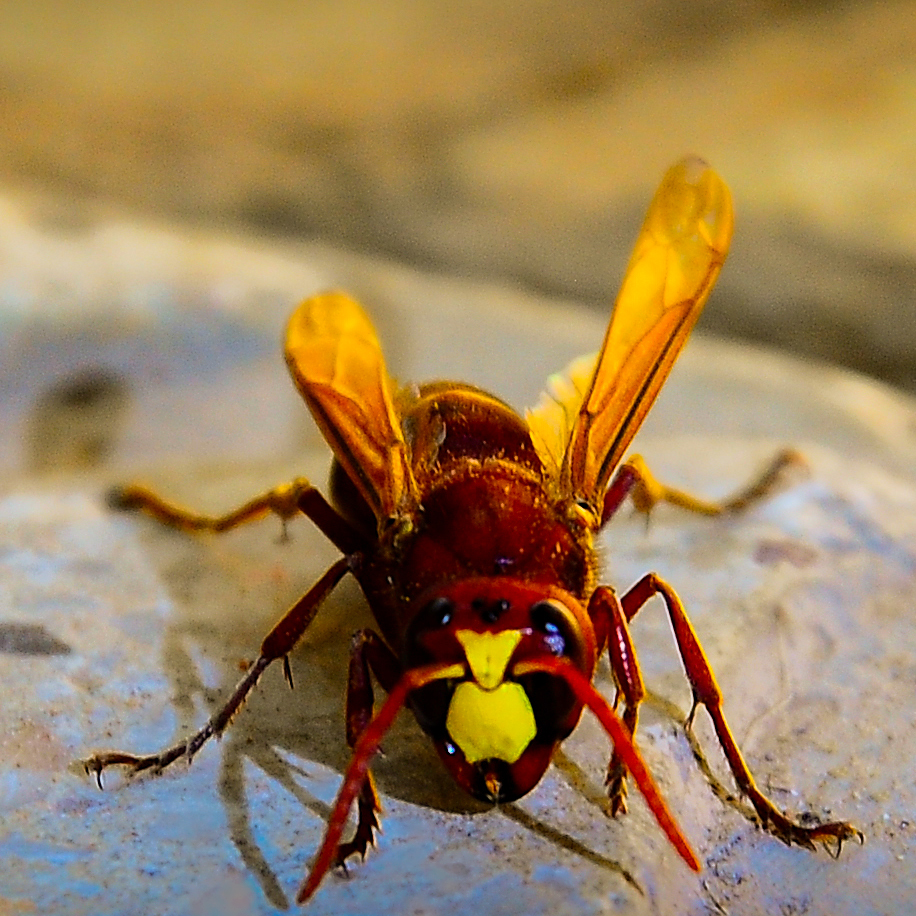 How to withdraw os Remedy for wasps 59