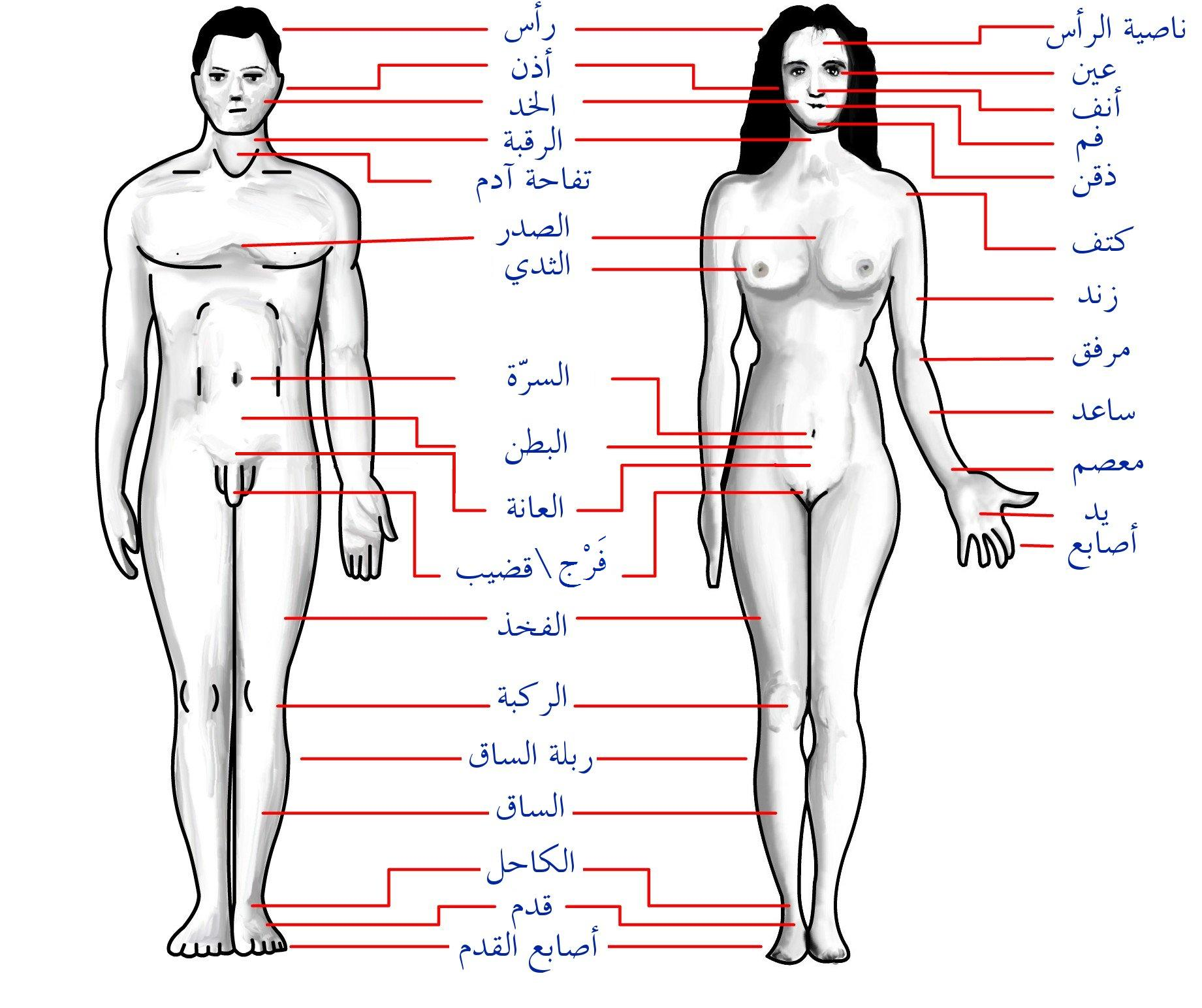 Human Body Features Arg