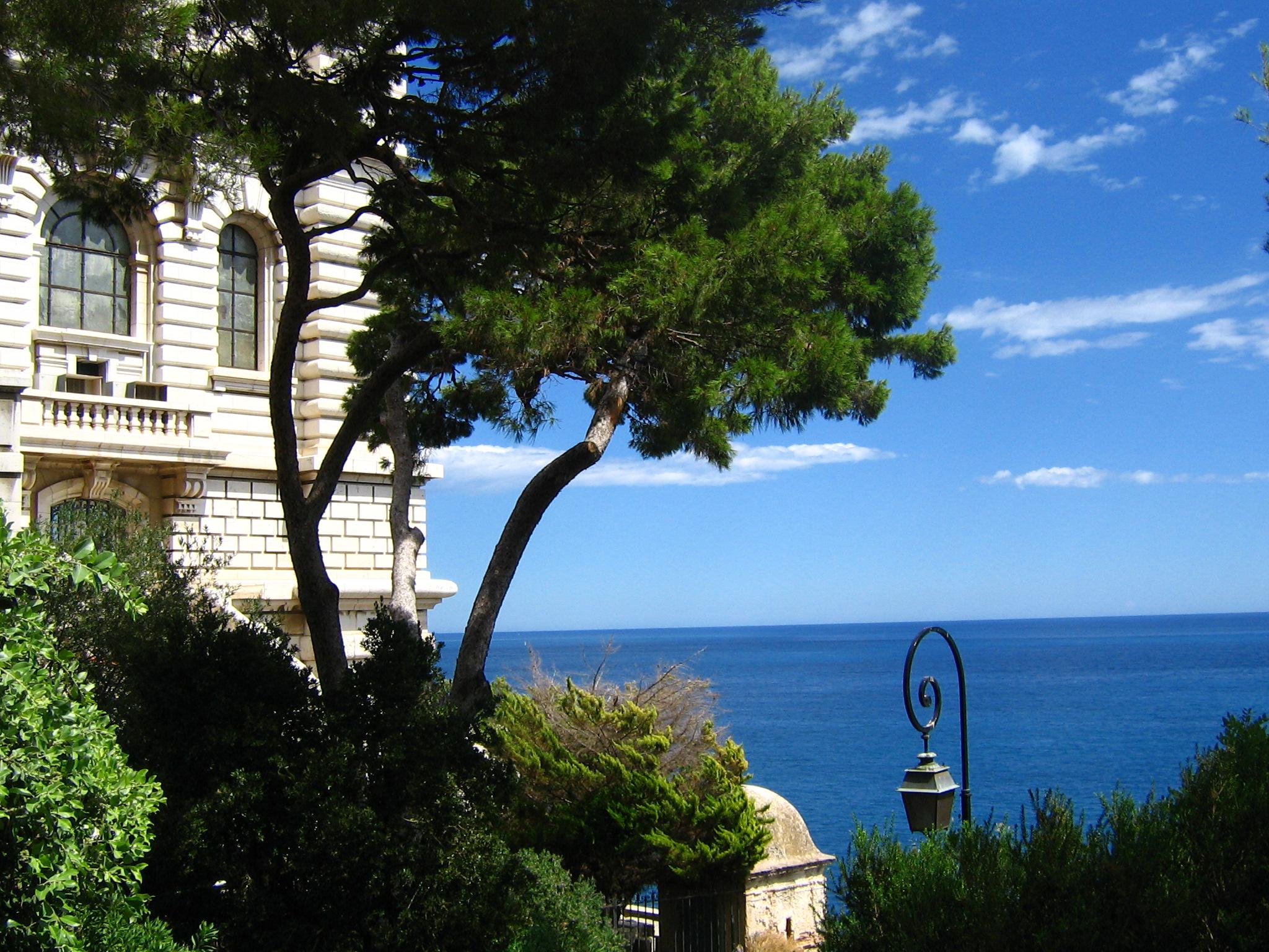 filejardin exotique de monaco1jpg wikimedia commons With photo de jardin exotique 1 filechorisia monaco jpg wikimedia commons