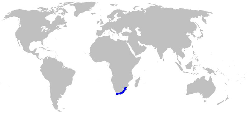 Agapanthus range map