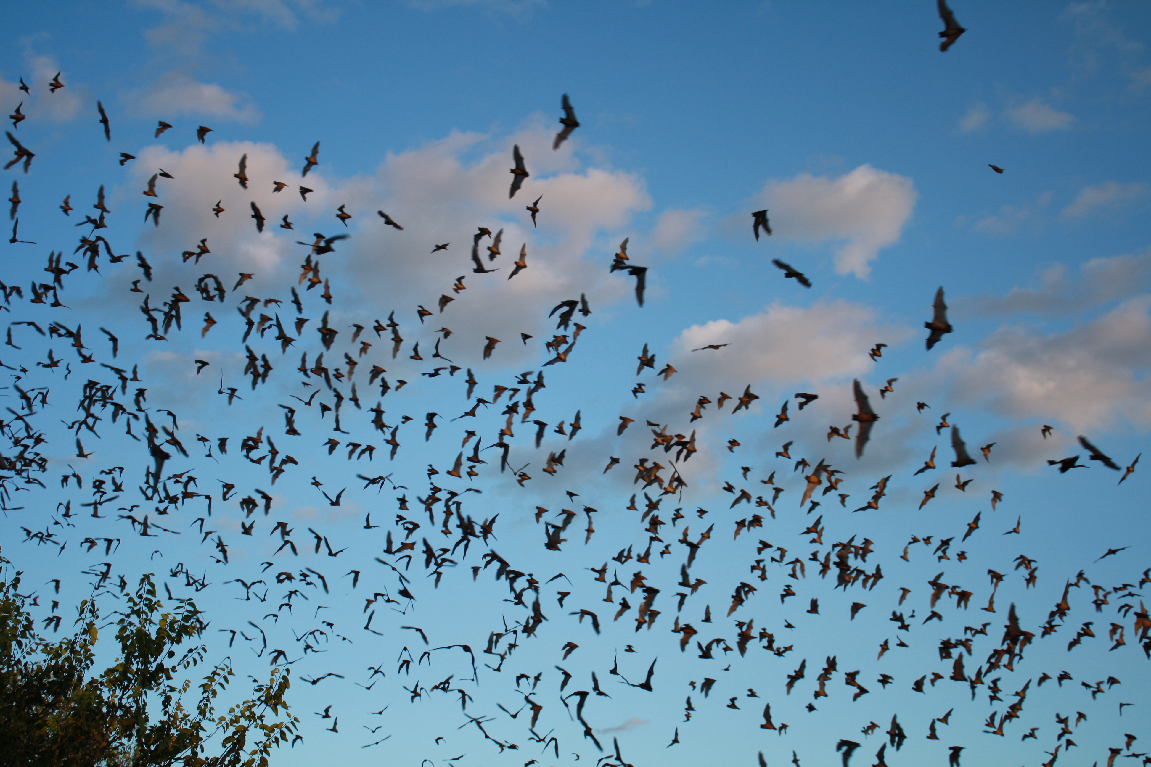Welcome To The Bat Cave - social networking