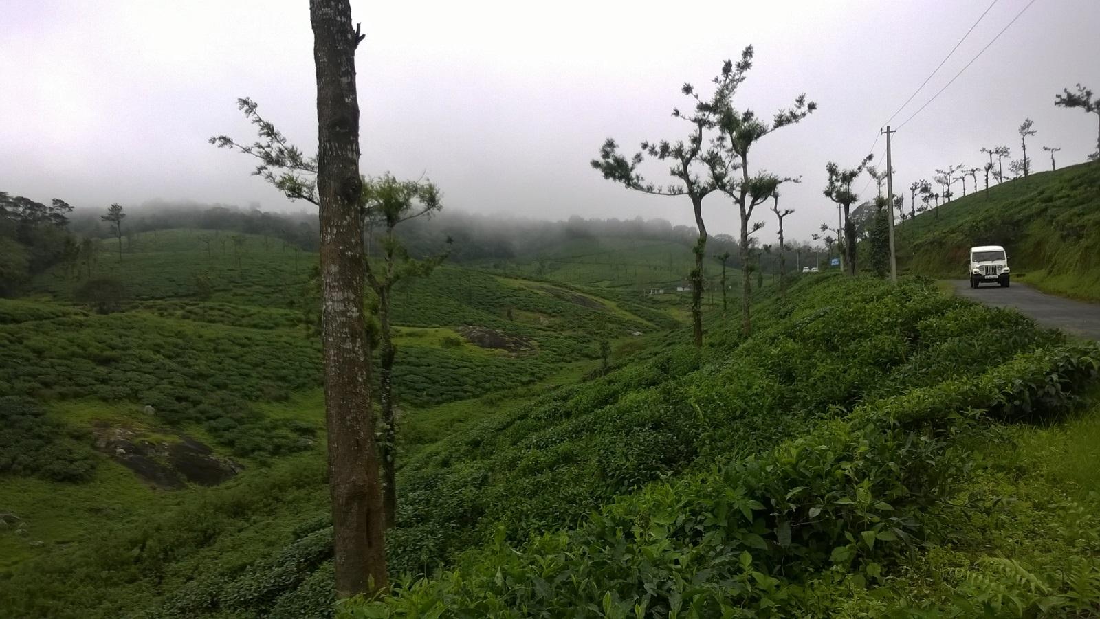 Tea gardens in Nelliyampathy