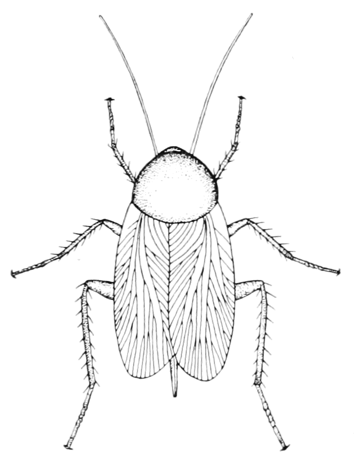 Image Result For Insect Coloring Pages